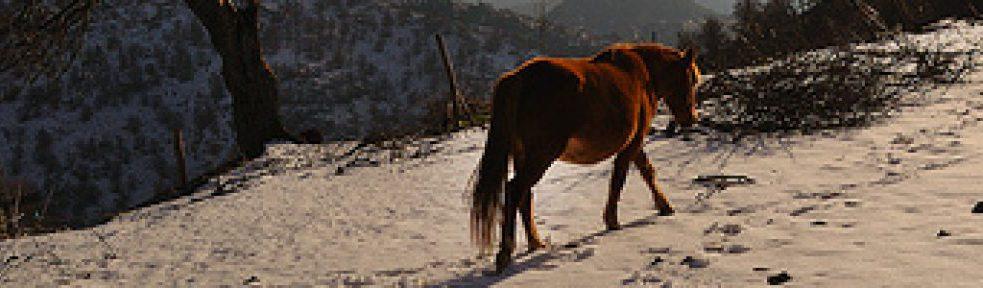 Lone Horse Blog